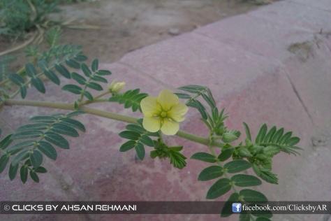 Little Tropical Flower